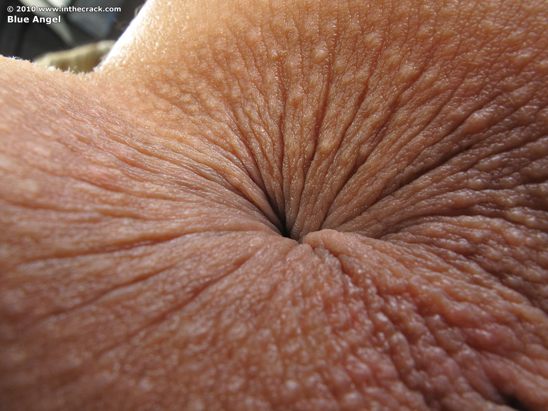 Female ass holes up close